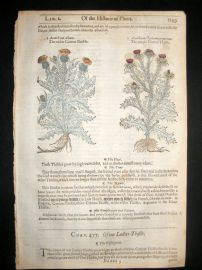Gerards Herbal 1633 Hand Col Botanical Print. Cotton & Ladies Thistle
